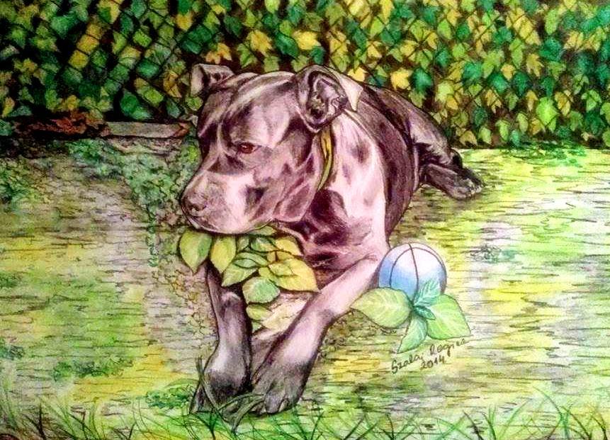 színes kutya portré Carmen emlékére