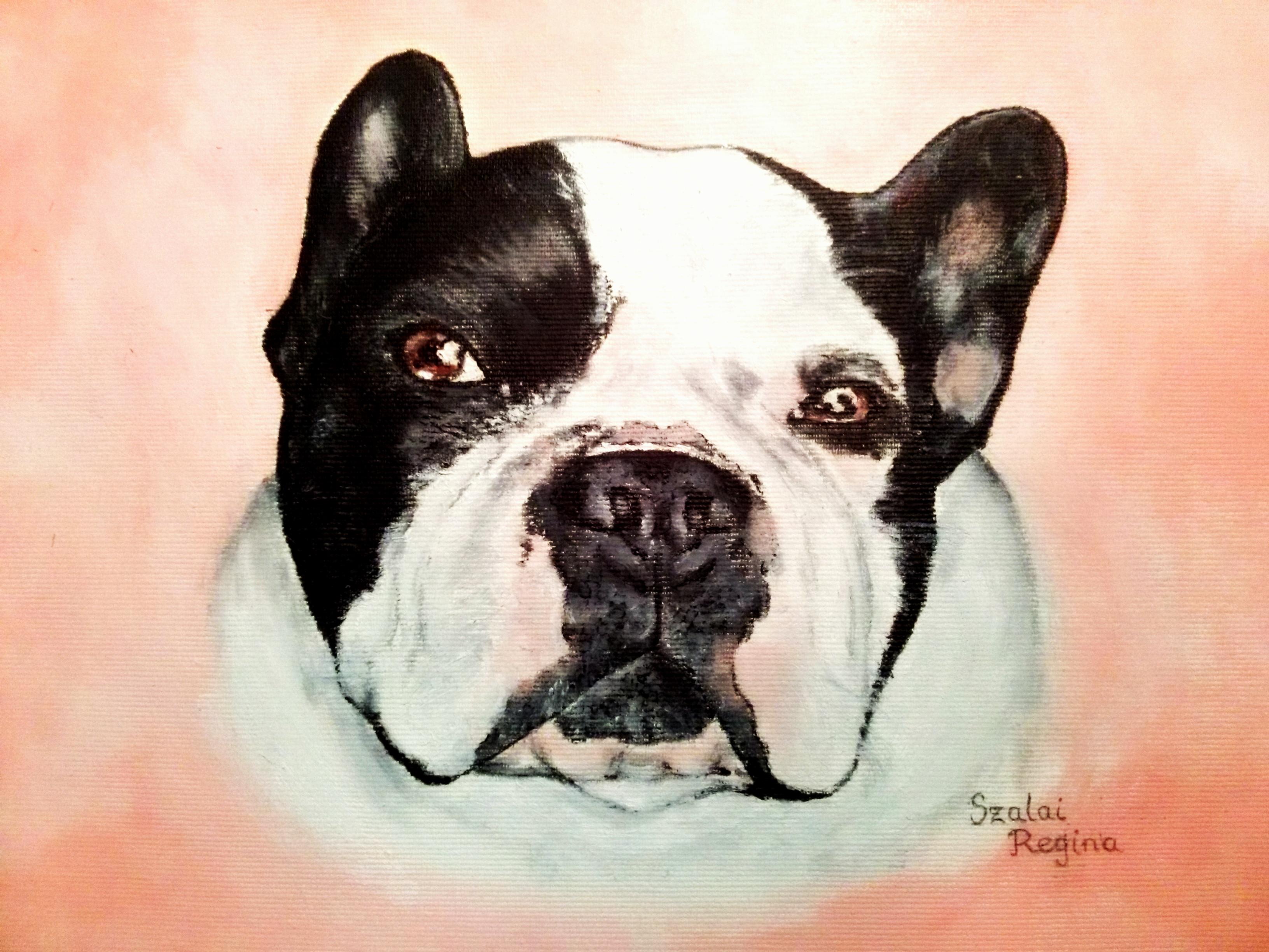 kutya portré, színes
