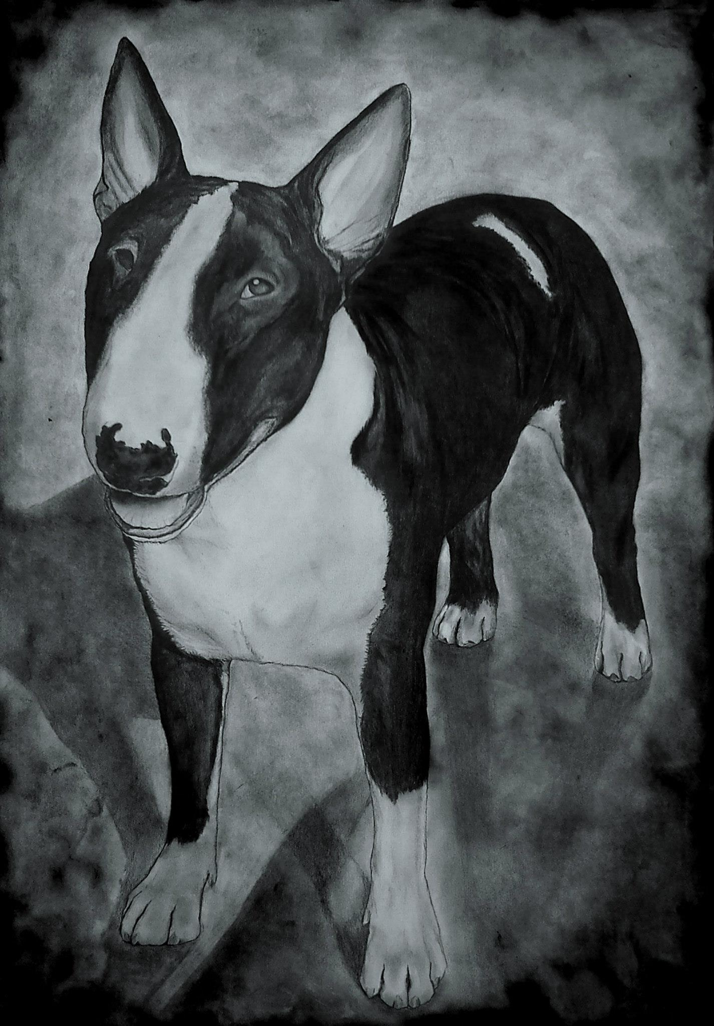 kutya portré