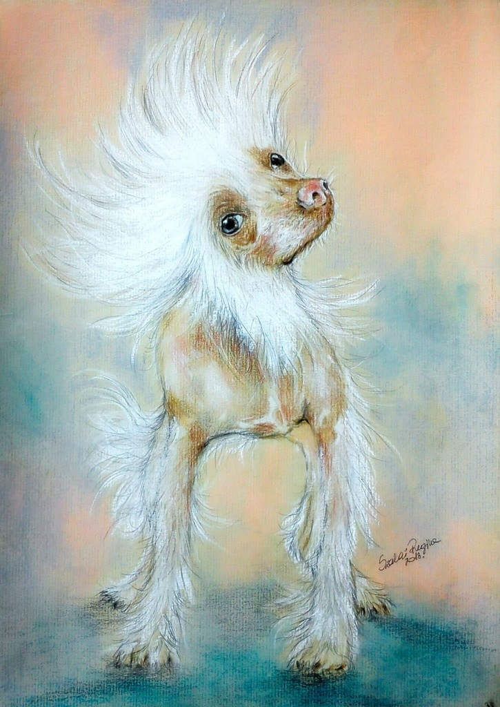 vicces kutya portré, színes