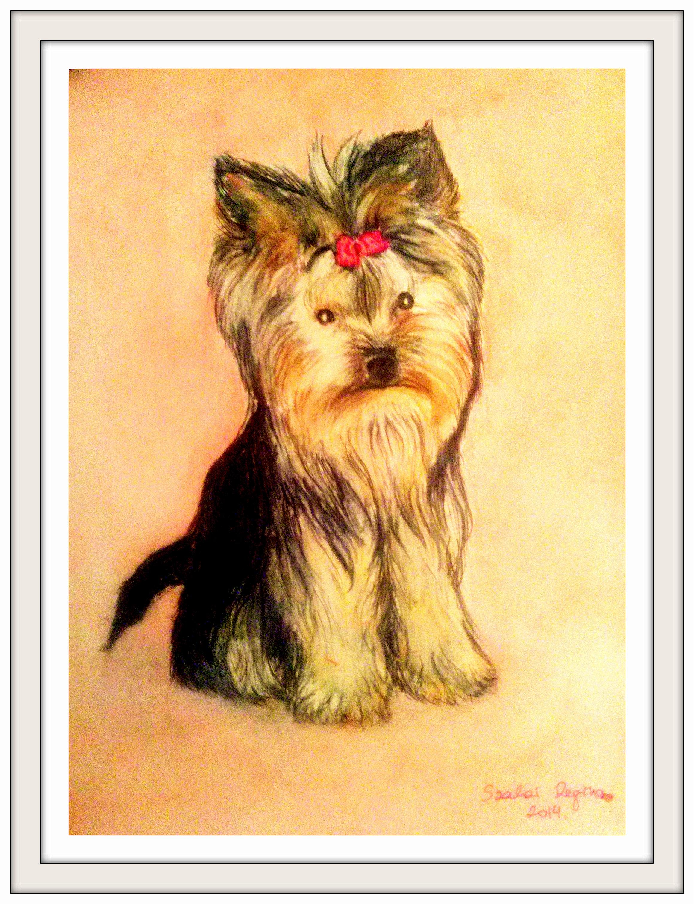kutya portré, BOGI